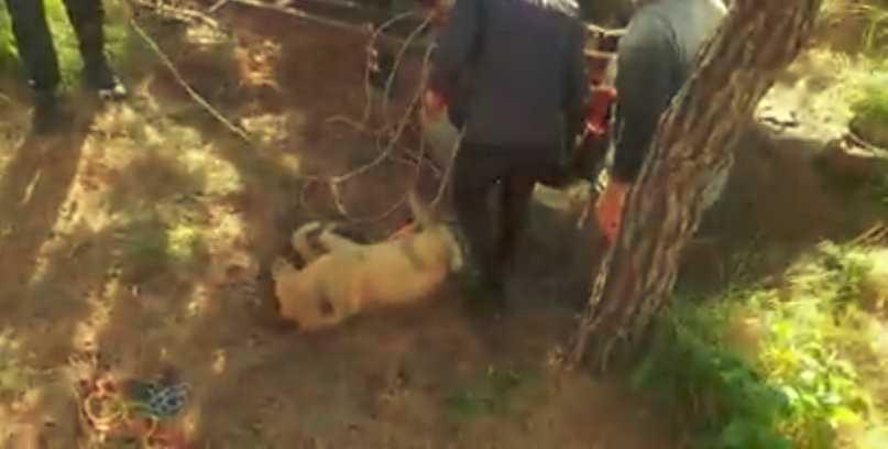 10 metrelik kuyuya düşen köpeği itfaiye ekipleri kurtardı