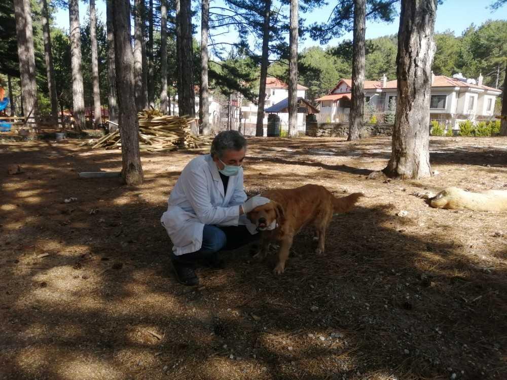 Alanya Belediyesinden sokak hayvanlarına aşılama çalışması