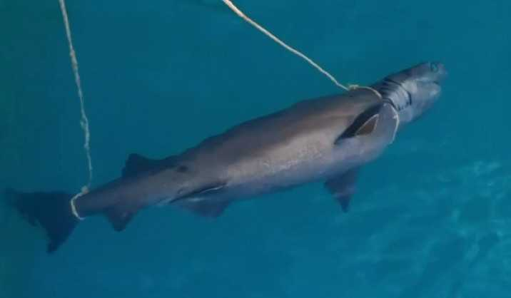 Antalya'da denizde köpek balığı ölüsü bulundu
