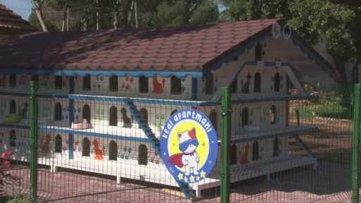 Antalya'ya 3 katlı 64 odalı kedi apartmanı