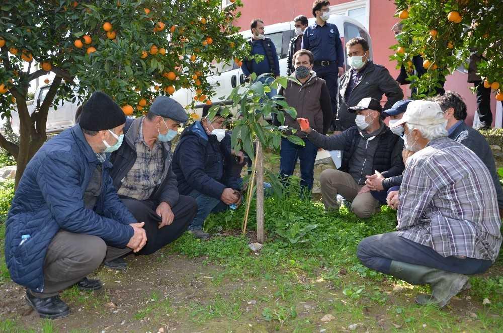 Büyükşehir Belediyesinden  Alanyalı çiftçilere uygulamalı eğitim