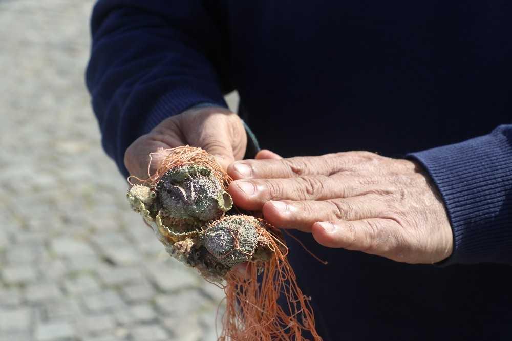 """Prof. Dr. Gökoğlu: """"Biyolojik bir kirlilik, Akdeniz ekosistemini değiştirmeyi amaçlayan canlılar bunlar"""""""