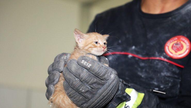 Büyükşehir binasında yavru kedi kurtarma operasyonu