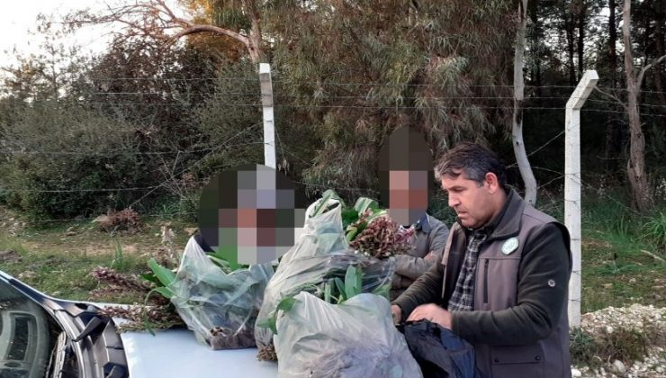 İzinsiz  toplanan 346 orkideye 160 bin TL ceza