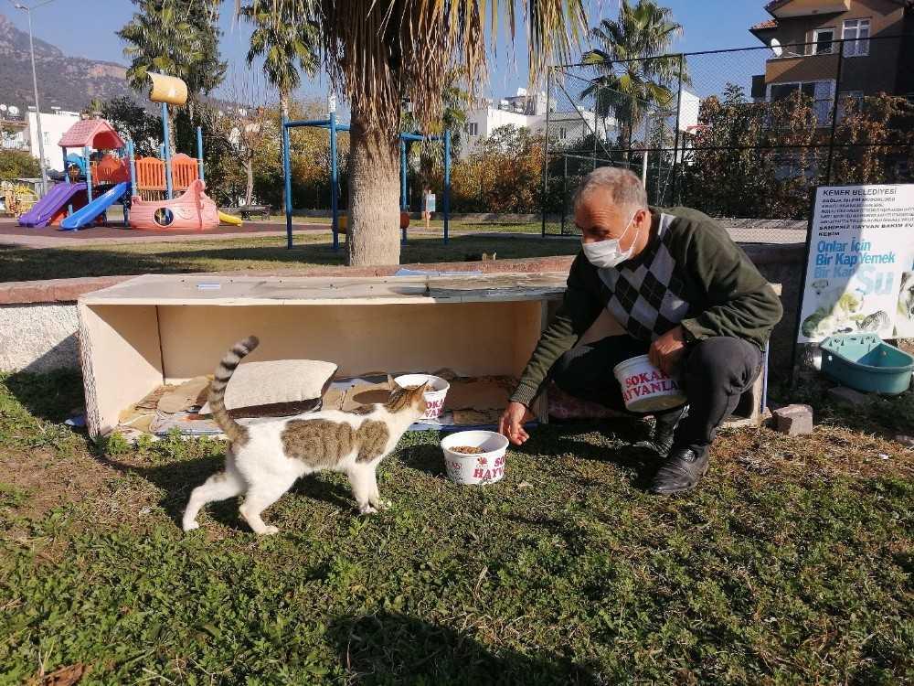 Kemer'de bir ayda 27 sokak hayvanı sahiplendirildi