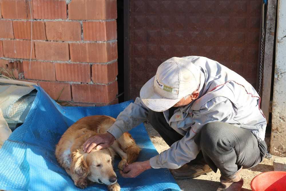 Köpeğinin vurulduğunu veterinere götürünce anladı
