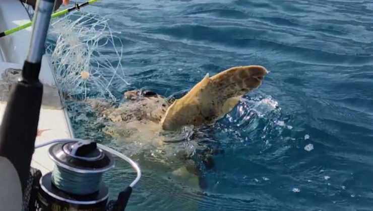 Olta misinasına takılan Caretta Caretta'yı balıkçılar kurtarıp denize bıraktı