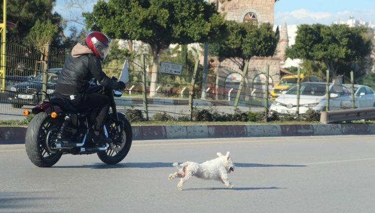 (ÖZEL) Antalya'da sahibini kaybeden köpek trafiği birbirine kattı