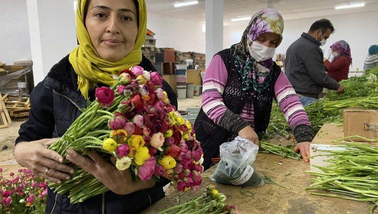 (ÖZEL) Cebinde getirdiği hediye tohumla Antalya'da üretime başladı, taleplere yetişemiyor