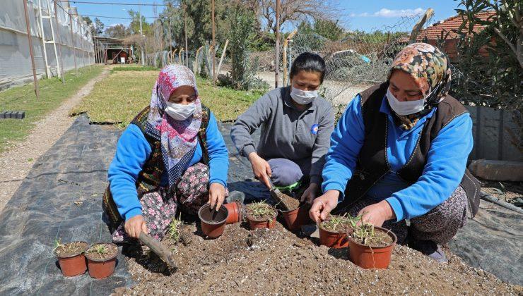 Susuzluğa ve kuraklığa dayanaklı 12 bin 500 adet çim fidesi üretildi