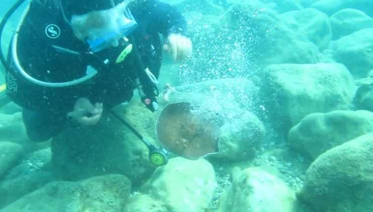 Ünlü profesöre su altında elektrikli vatoz balığı şoku