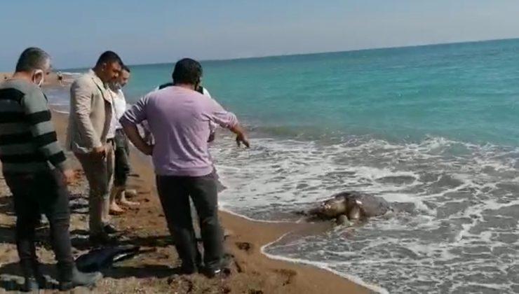 Balıkçı ağlarına takılan caretta caretta sahile ölü olarak vurdu