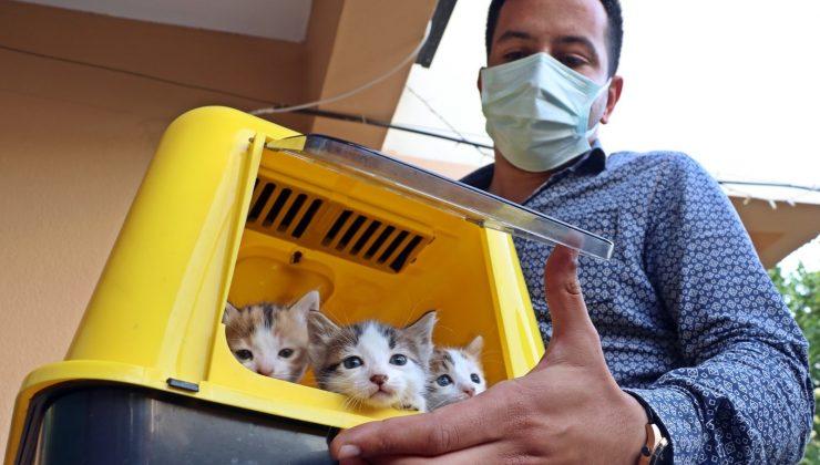 Kahraman kedi, yavrularını korumak için kendini feda etti
