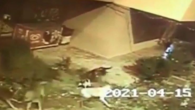 Köpekler anne kediye saldırıp telef etti, yavruları vatandaşlar tarafından kurtarıldı