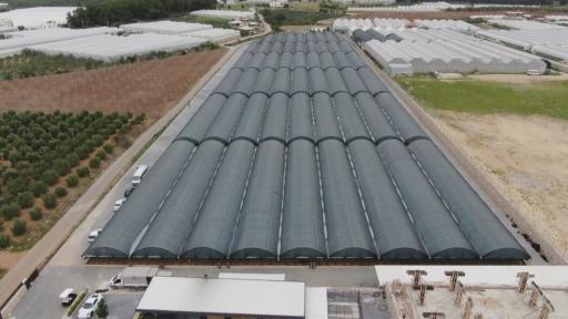 Topraksız çilek üretimiyle 4 kat daha fazla ürün