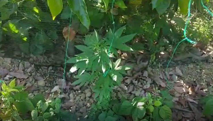 Alanya'da fasulye serasına uyuşturucu baskını