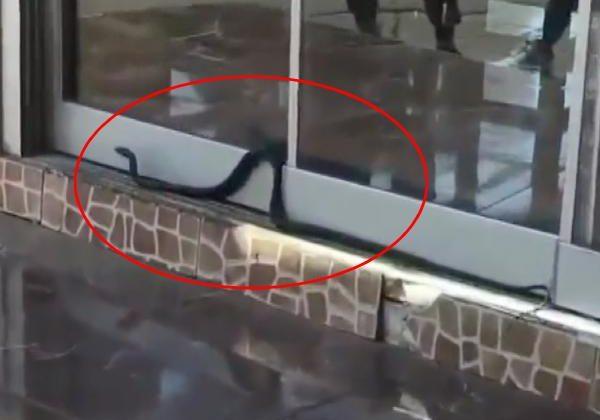Antalya'da 1.5 metrelik yılan iş yerine girmeye çalıştı
