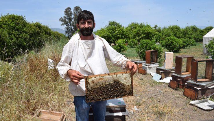 Antalya'da ilk bal hasadını yapan arıcılardan, aracı tepkisi