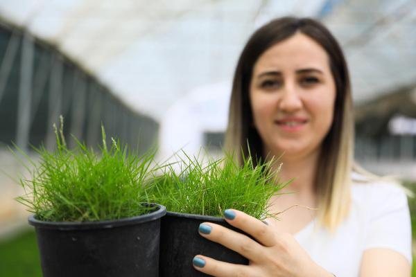 Antalya'da kuraklığa dayanıklı çim üretildi