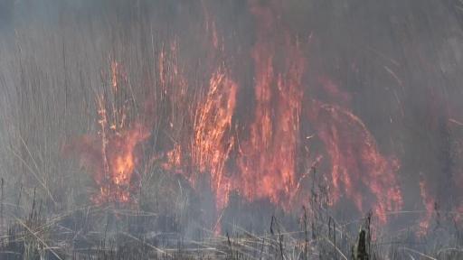 Antalya'da yangın sazlık alanı küle çevirdi