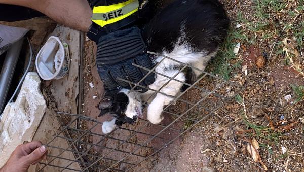 Başı tel örgüye sıkışan kediyi kurtarma çalışmalarını ağlayarak izledi