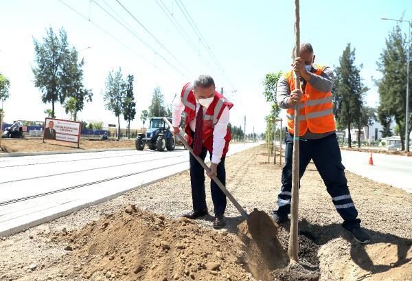 Başkan Böcek, tramvay hattına turunç fidanı dikti