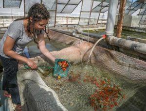 Cam sera içinde süs balığı yetiştiriyor