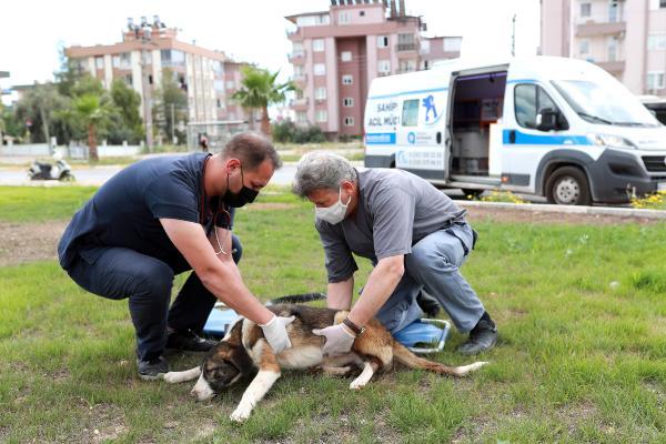 Hayvan ambulansı ile sevimli dostlara anında müdahale