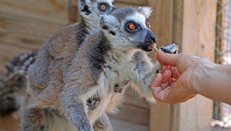 Hayvanat Bahçesi ailesi 150 yeni doğumla zenginleşti