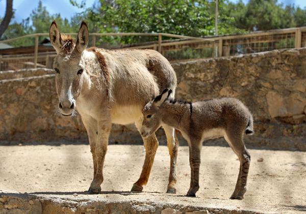 Hayvanat Bahçesi'nde 150 yeni yavru doğdu