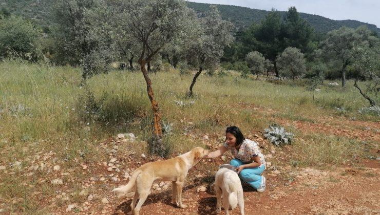 Kaş'ta tam kapanmada sokak hayvanlarına mama desteği