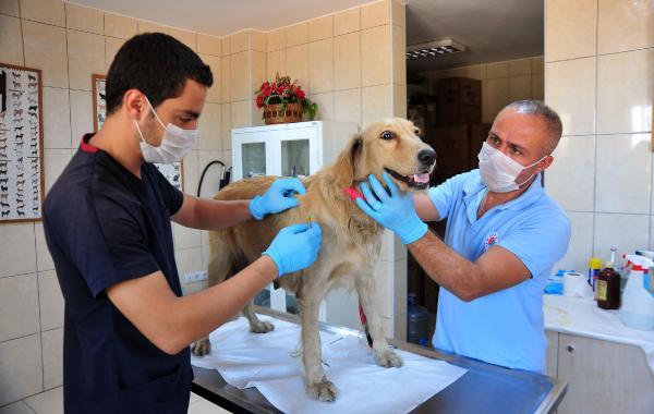 Kepez'den hayvanlara hastane ve doğal yaşam parkı