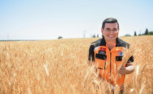 Kepez'in buğday tarlalarında ikinci hasat yapıldı