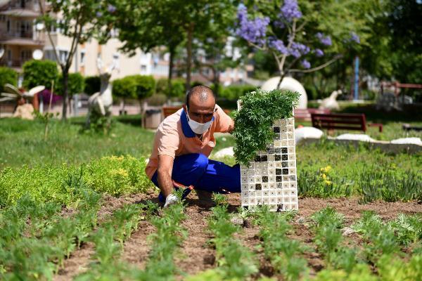 Muratpaşa'da 500 bin çiçek dikiliyor