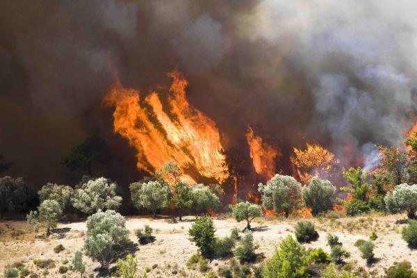 Orman yangınları en çok pazar ve öğleden sonra çıkıyor