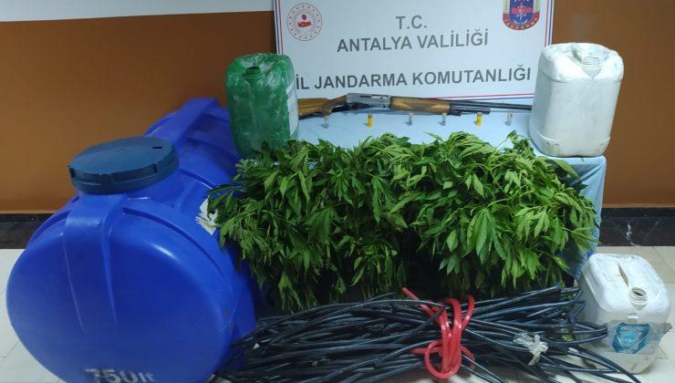 Ormanlık alana uyuşturucu tarlası baskını: 1 tutuklama