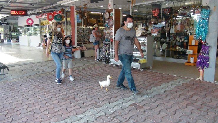 (Özel) Ördekleriyle çarşı pazar geziyor, görenleri şaşkına çeviriyorlar
