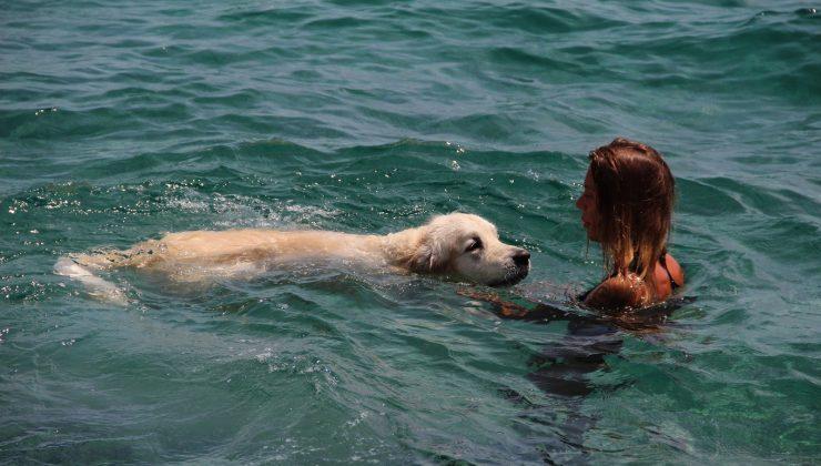 (Özel) Rus turist, 9 bin kilometrelik yoldan getirdiği köpeğiyle Antalya'da deniz keyfi yaptı