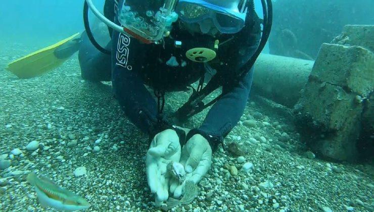 Ünlü profesör siyanürden bin 200 kat daha güçlü zehri olduğu belirtilen balon balıklarını su altında elleriyle besledi