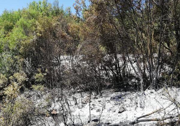 Vatandaşlar yangını büyümeden söndürdü