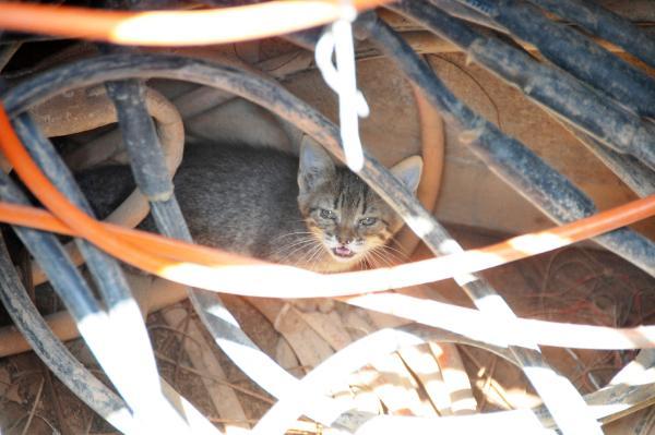 Yavru kediyi, kedi sesi dinleterek kurtardılar