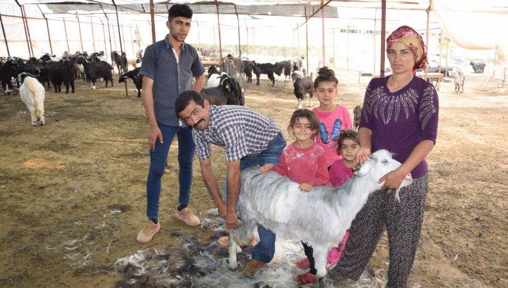 Yılda 6 ayrı yer değiştiren çobanlar göç etmeye hazırlanıyor