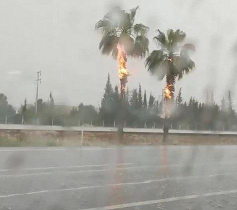 Yıldırım düşen palmiye ağaçları alev alev yandı