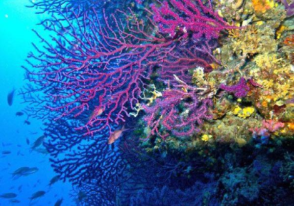 Akdeniz, gezegenin en hızlı ısınan ve en tuzlu denizi haline geldi