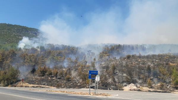 Antalya'da orman yangını çıktı, karayolu ulaşıma kapatıldı/ Ek fotoğraflar