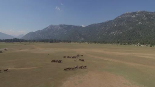 Antalya'da özgürlüğün sembolü 'Yılkı Atları'