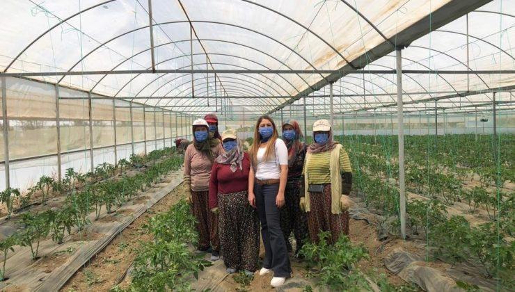 Antalya'nın yaylalarında örtü altı üretim artıyor