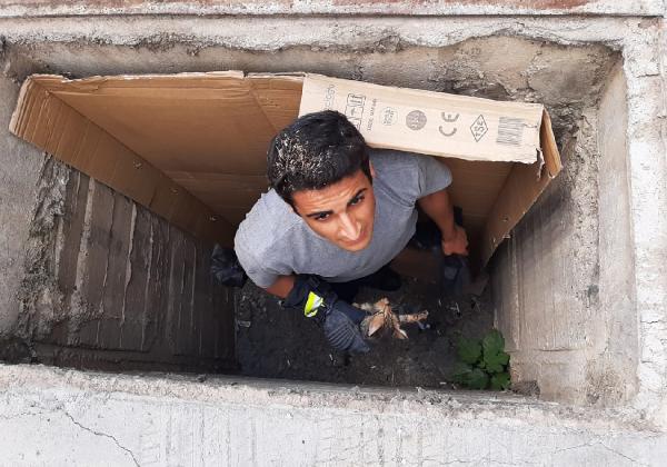 Büyükşehir itfaiyesinden kedi kurtarma operasyonu