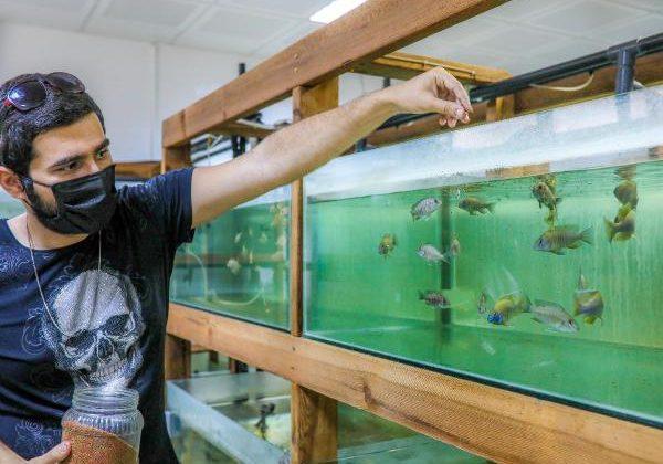 Denek balıkları öğrenciler büyütüyor