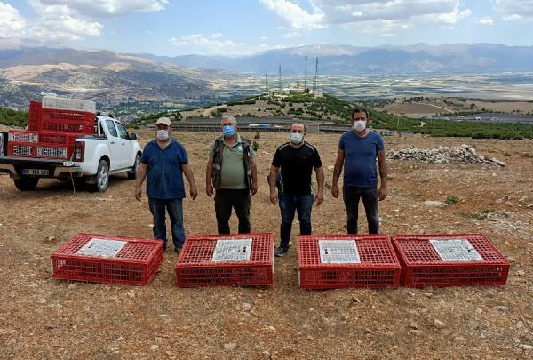 Elmalı'da 1500 keklik doğaya salındı